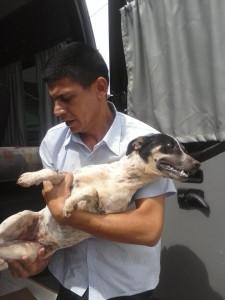 Cachorra chegou a ser socorrida, mas não sobreviveu. Foto; Reprodução Facebook / Voluntários dos animais.