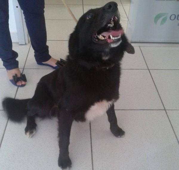 Cães ficarão disponíveis para adoção em Pouso Alegre (Foto: Carla Viviane / ONG SOS Bichos)