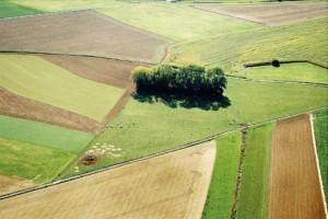 Hectare de terra em Pouso Alegre é o segundo mais caro de Minas Gerais. Imagem ilustrativa