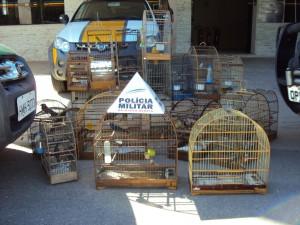 29 pássaros silvestres estavam presos em cativeiro ilegal. Foto: Polícia Militar