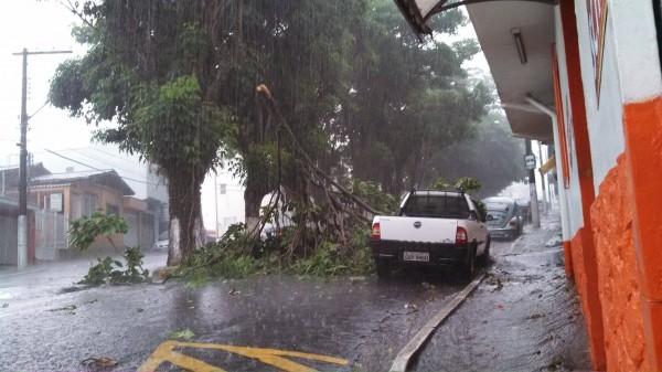 Galho de árvore caiu no centro da cidade.