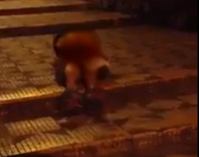 Imagem foi embaçada. Vídeo mostra cenas explicitas.