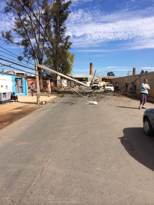 Na queda, árvore derrubou postes e fiação. Foto: Fernando Lima