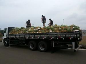 Caminhão foi apreendido com drogas camufladas com melancias. Foto: PRF