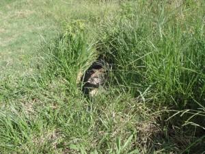 Este ainda estava numa rua transversal do bairro! Nem a coleira vermelha o salvou da 'bolinha' do matador de cachorro.