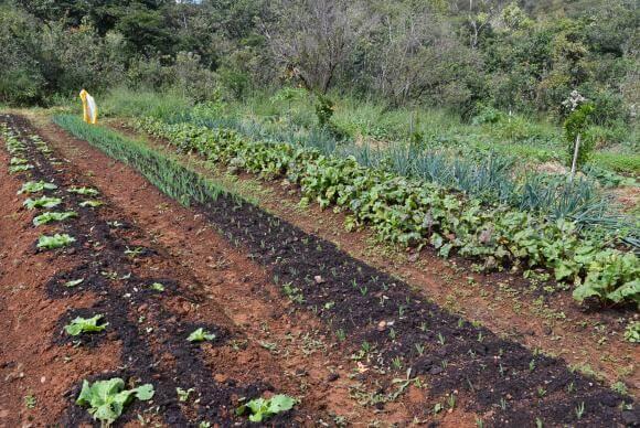 Tecnologia é cada vez mais usada por agricultores de orgânicos para incrementar vendas. Antonio Cruz/Agência Brasil