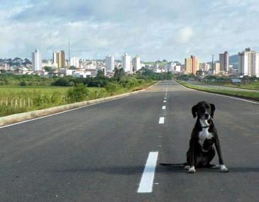 cachorra_dique2