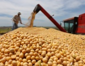 A safra nacional de cereais, leguminosas e oleaginosas este ano deverá ser 5,9% maior do que a registrada em 2014. Segundo os dados do Levantamento Sistemático da Produção Agrícola, feito em maio pelo Instituto Brasileiro de Geografia e Estatística (IBGE), 2015 deve fechar com safra total de 204,3 milhões de toneladas. O levantamento de maio […]