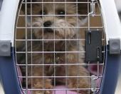 Animais com peso de até 10 quilos deverão estar higienizados, vacinados, e dentro de uma caixa apropriada para transporte.
