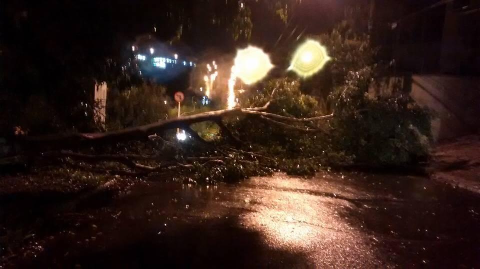 Árvore caiu na Av Policarpo Gonçalves Campos. Foto: Yara Moreira