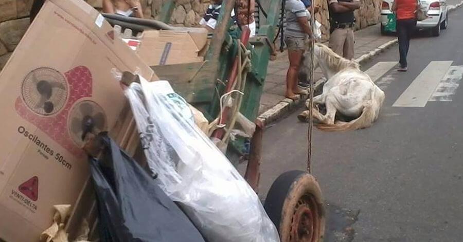 Cavalo cai de cansaço no centro de Pouso Alegre.