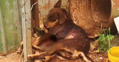 Cachorro foi morto a facadas no bairro São Geraldo.