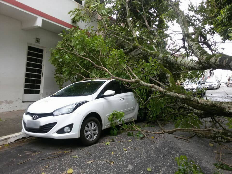 Árvore caiu em cima de carro no bairro Santo Antônio. Foto: Dair José da Rosa