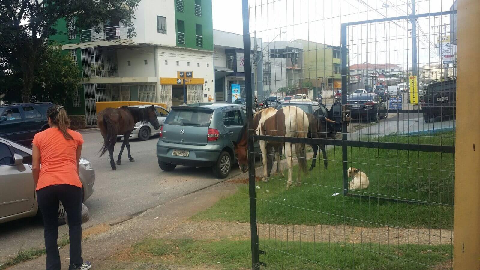 Flagrante foi registrado hoje na Av. Pref. Olavo Gomes de Oliveira, a mais movimentada de Pouso Alegre.