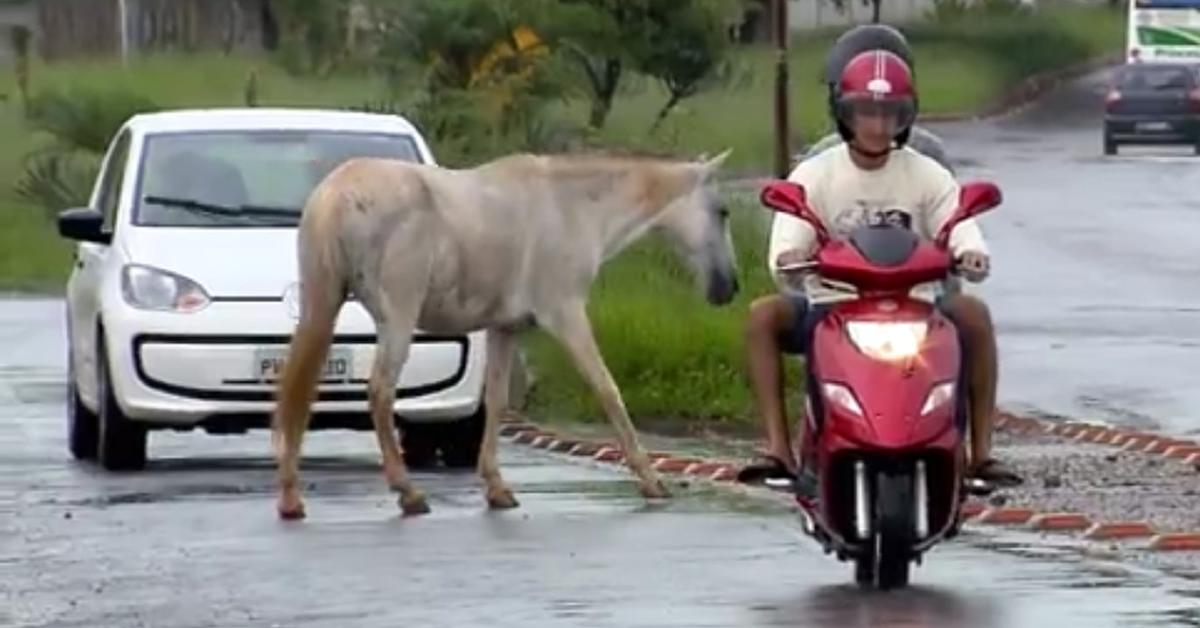 Cavalos soltos pelas ruas tem causado problemas em Pouso Alegre.